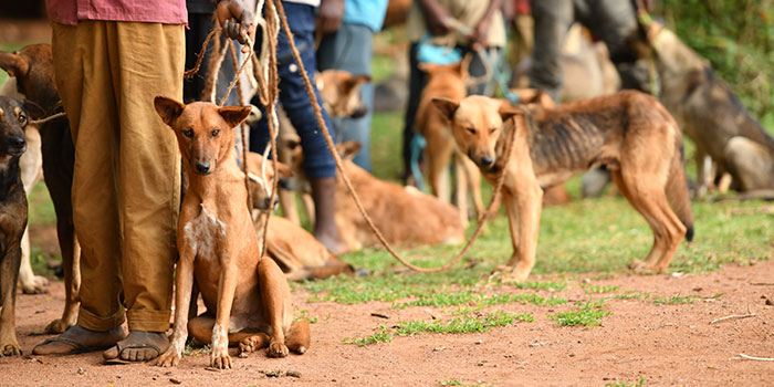 Rabies vaccination line in Africa.