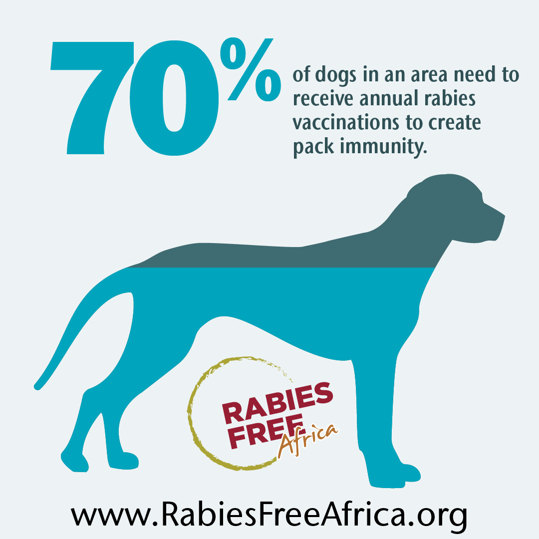 70% of dogs in an area need to receive rabies vaccinations for rabies to no longer be transmitted and create pack immunity. Image of dog infographic.