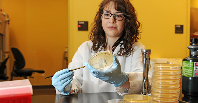 PhD candidate Jessica Klein working in laboratory with petri dishes.