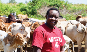 Thumbi with African Cows